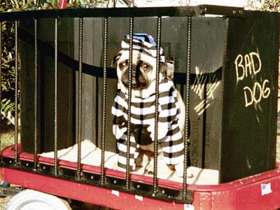 http://steelturman.typepad.com/photos/uncategorized/dog_in_jail1.jpg