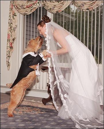 [Image: dog_wedding.JPG]