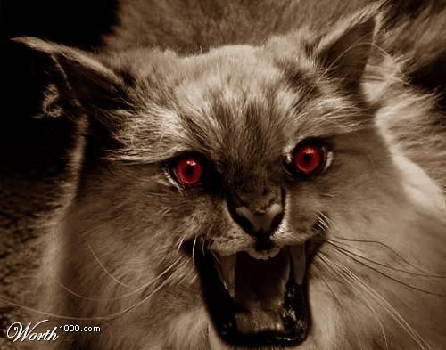 Evil Cat Pictures 24
