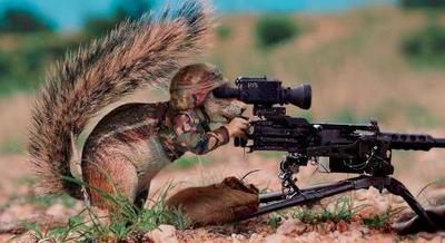 attack_of_the_killer_squirrel_gun_r.jpg