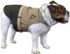 Marine_mascot_dog